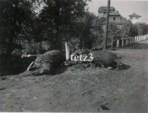 Polen 1939 vormarsch Zamość Schlachtfeld Pferde.jpg