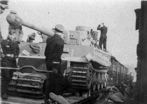 Tigerna platformie.jpg