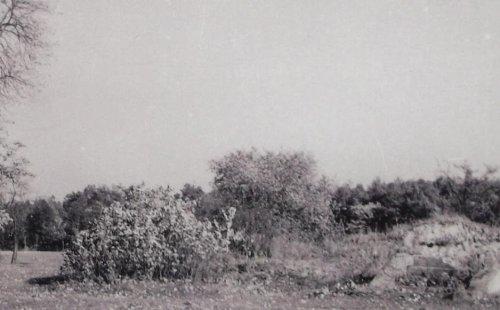 lesnicz3 schodki.JPG