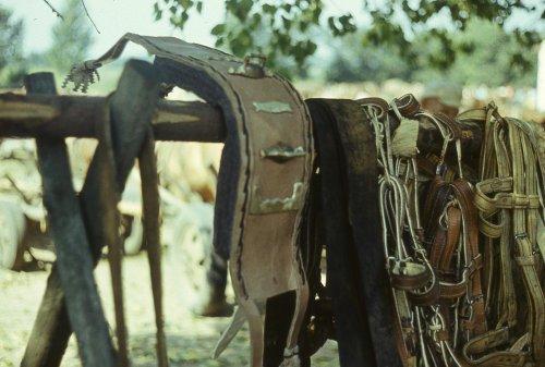 Uprząż końska.jpg