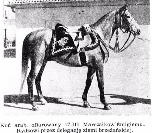 k slawne konie 2.JPG