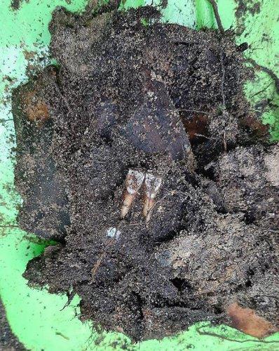 bierun_ekshumacja-4.jpg