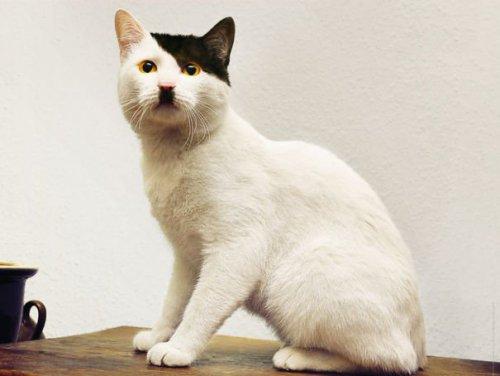29615-koty-o-niecodziennych-futerkach-9.jpg