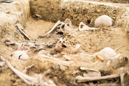 z26238615V,Badania-archeologiczne-na-miejscu-pochowku-zolnier.jpg