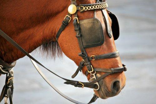Horse_Blinkers_(4240744343).jpg