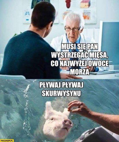 lekarz-musi-sie-pan-wystrzegac-miesa-co-najwyzej-owoce-morza-swinia-plywaj-plywaj.jpg