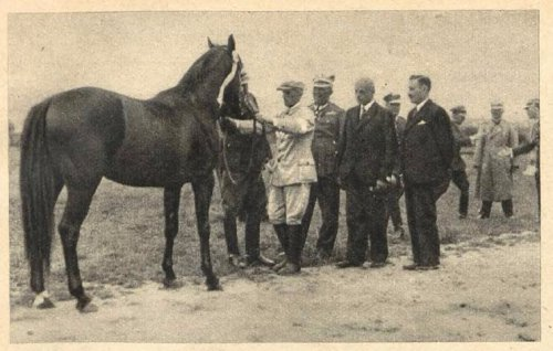 mond wystawa koni pod krakowem.JPG